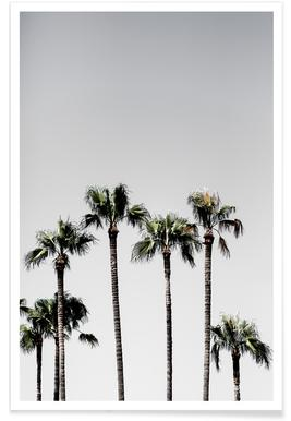 Palm Trees 5 - Affiche
