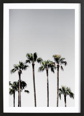 Palm Trees 5 Poster i träram