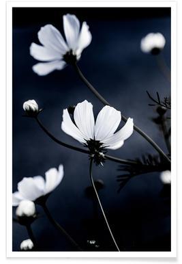 Wild Flowers 1 affiche