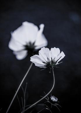 Wild Flowers 2 Canvastavla