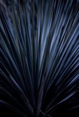 Blue Straws 2 Acrylic Print