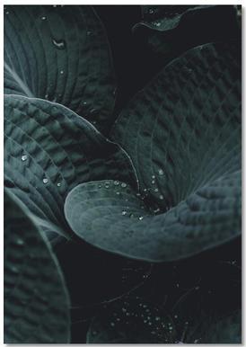 Dark Leaves 5 Notebook