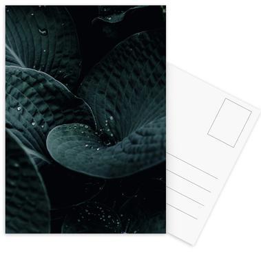 Dark Leaves 5 Postcard Set
