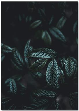 Dark Leaves 6