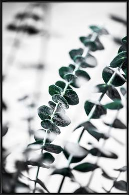 Eucalyptus 1 Framed Poster