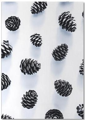 Pine Cones