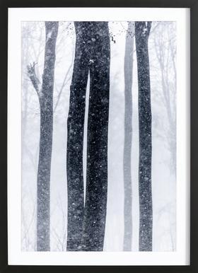 Snow Trees 2 -Bild mit Holzrahmen