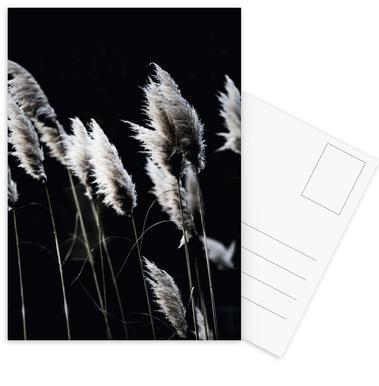 Grass 4 Postcard Set