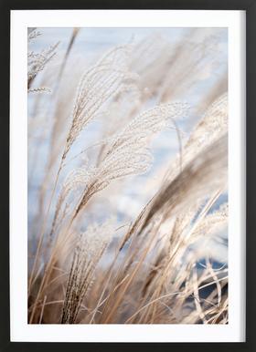 Grass 5 Framed Print