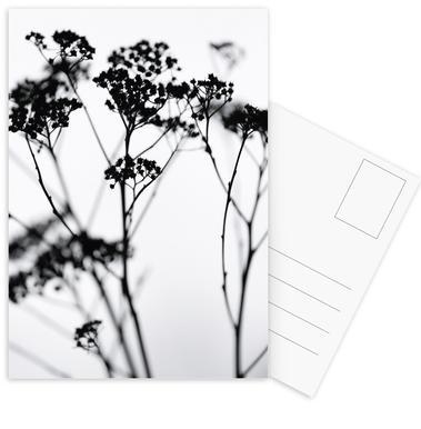 Silhouettes 4 Postcard Set