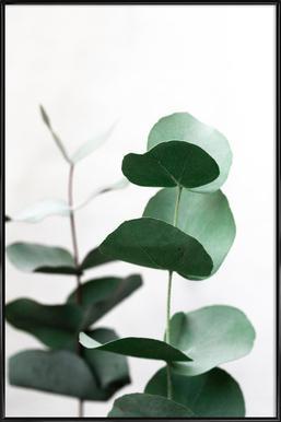 Eucalyptus 5 Framed Poster