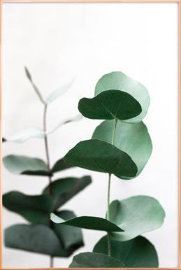 Eucalyptus 5 poster in aluminium lijst