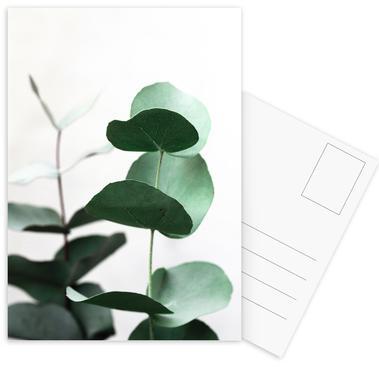 Eucalyptus 5