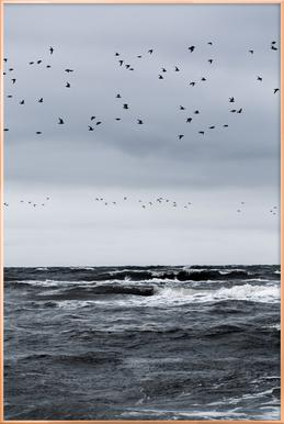 Birds and the Sea
