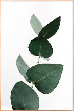 Eucalyptus 4 poster in aluminium lijst