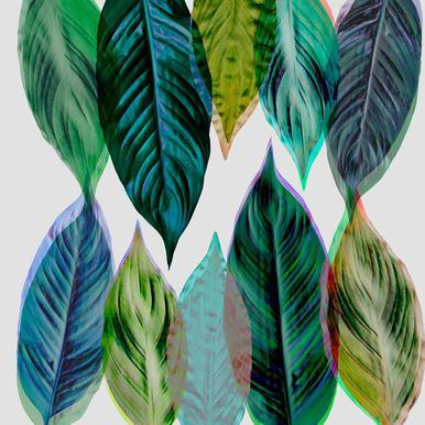 Green Leaves Aluminium Print