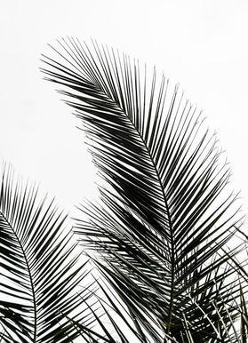 Palm Leaves 1 -Leinwandbild