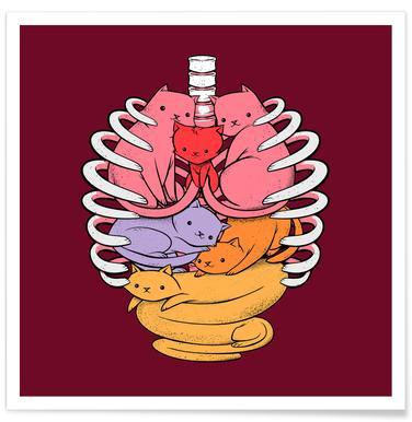 Anatomicat -Poster