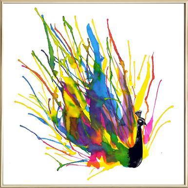 Colorful Peacock Poster in Aluminium Frame