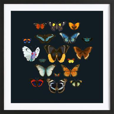 Entomology -Bild mit Holzrahmen