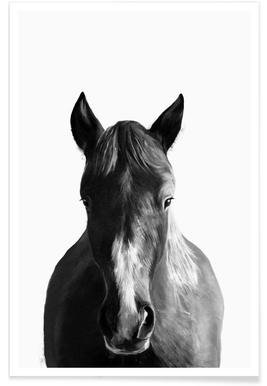Horse Illustration Poster