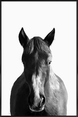 Horse - Affiche sous cadre standard
