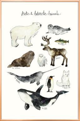 Arctic and Antarctic Animals -Poster im Alurahmen