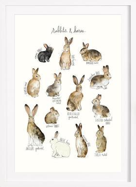 Rabbits and Hares - Affiche sous cadre en bois