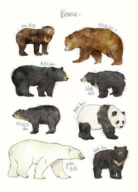 Bears canvas doek