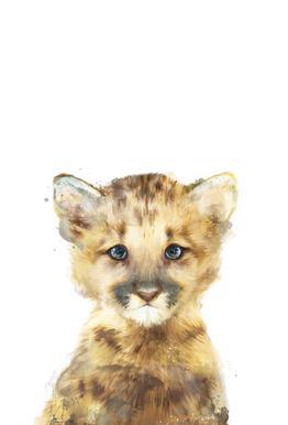 Little Mountain Lion