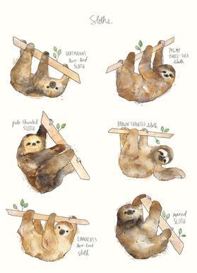 Sloths Canvas Print