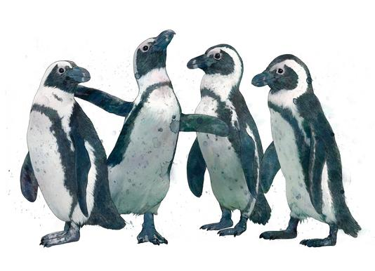 Penguins canvas doek