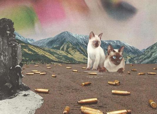 Big Cats of War