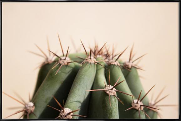 Cactus 02 Framed Poster