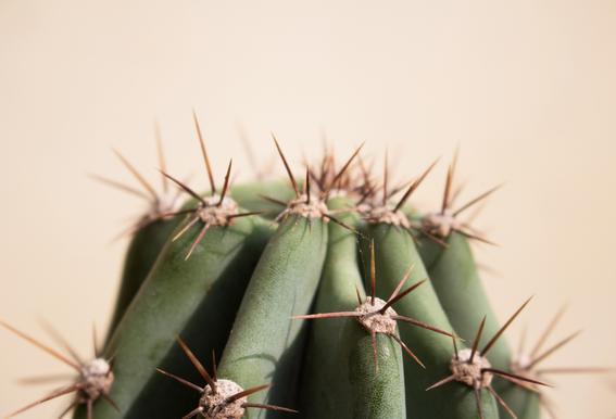 Cactus 02 Aluminium Print
