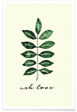 Ash Tree -Poster