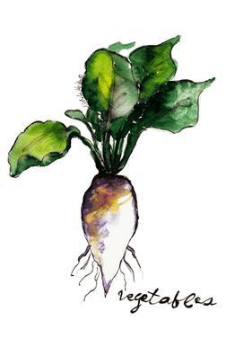 Vegetables Aluminium Print
