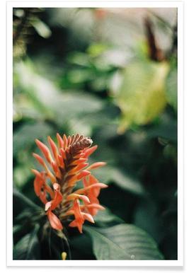Jungle #1