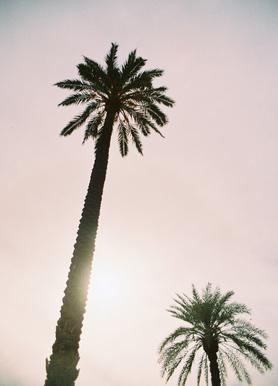 Palm Trees -Leinwandbild