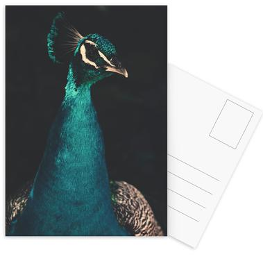 Peacock And Proud Postcard Set