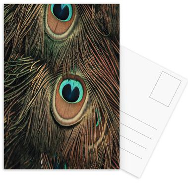 Peacock Feathers Postcard Set
