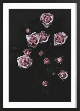 Velvet Rose Pink Framed Print