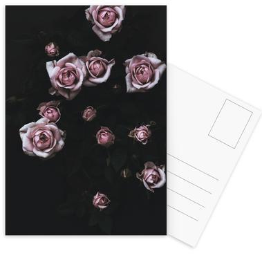Velvet Rose Pink Postcard Set