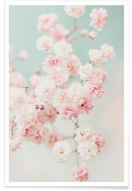 Pink Blush Gypsophila poster