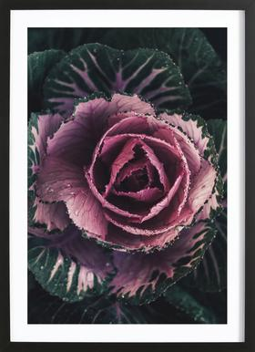 Pink Rosette