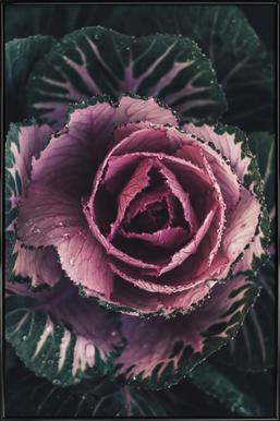 Pink Rosette -Bild mit Kunststoffrahmen