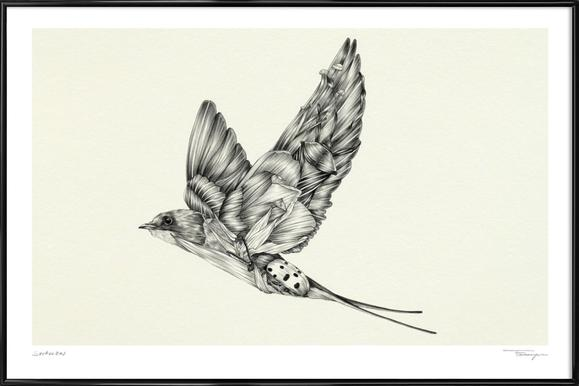 Swallow Framed Poster