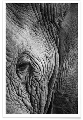 Nambithi Elephant 01 Poster