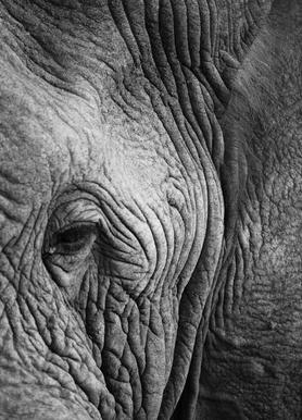 Nambithi Elephant 01 Canvas Print