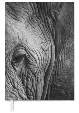 Nambithi Elephant 01